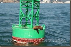 Sea Lion on Buoy in San Diego Harbor